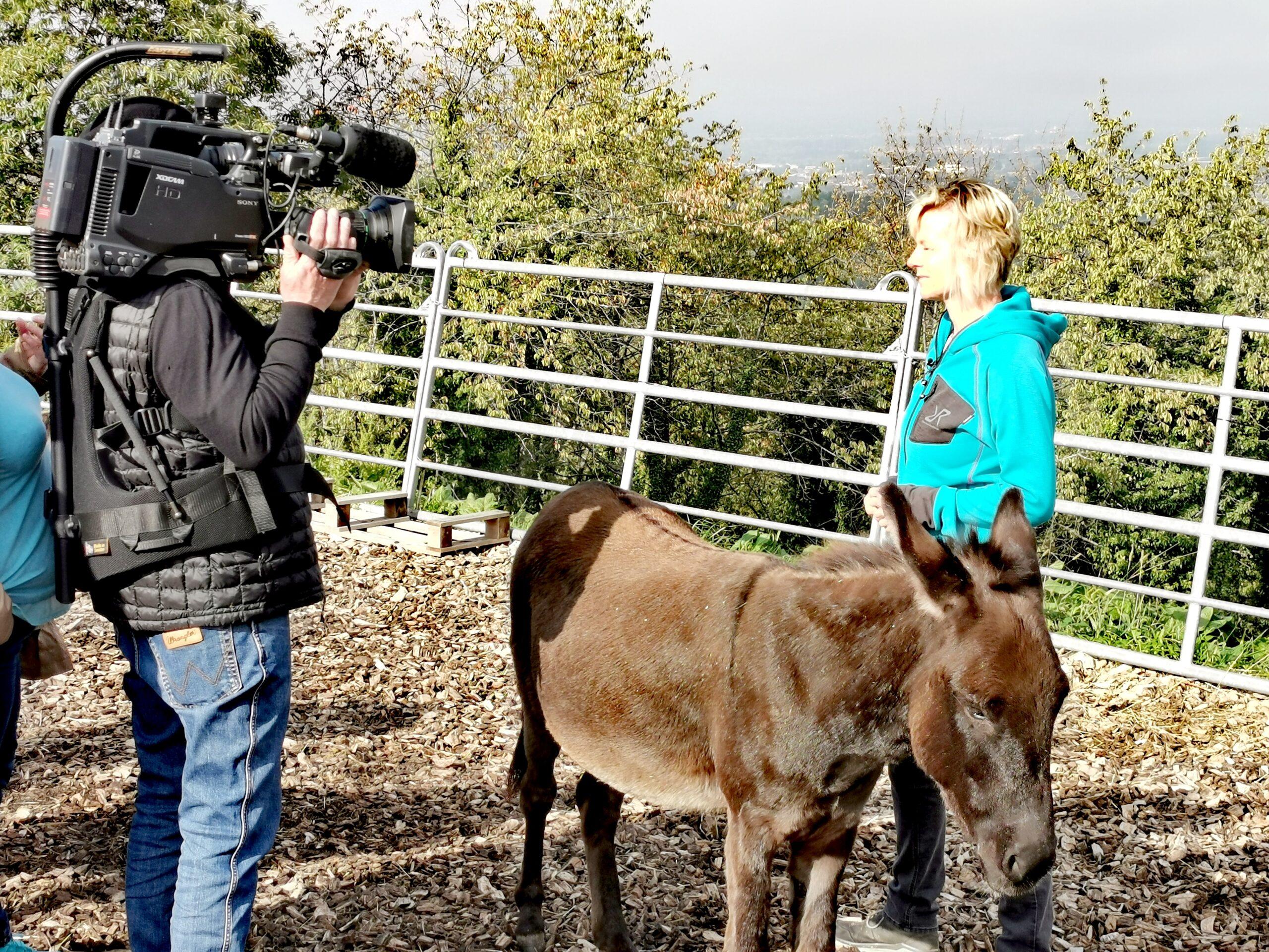 ARD: Tiergestützte Therapie: Mehr als nur Kuscheln