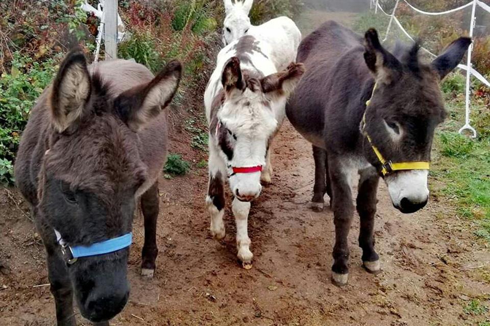 Baden TV: Unsere Esel im therapeutischen Einsatz
